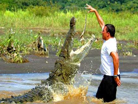 Crocodile Tour Costa Rica