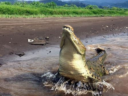 Crocodile Tours Jaco Costa Rica