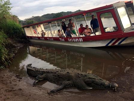 Jaco Crocodile Tour