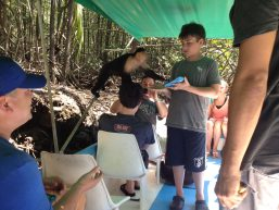 Mangrove Monkey Tour