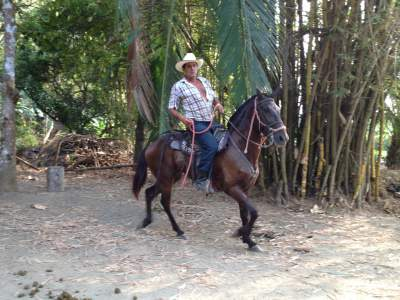 Horseback Tours Jaco Beach
