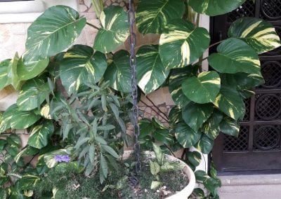 Villa Avalon Plant